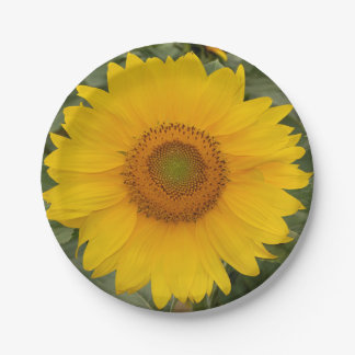 Golden Yellow Sunflower Paper Plates