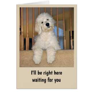 Goldendoodle any occasion card