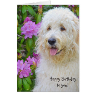 Goldendoodle Birthday Card
