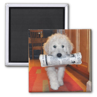 Goldendoodle carrying newspaper toy magnet
