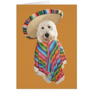 Goldendoodle Cinco de Mayo card
