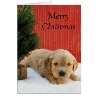 Goldendoodle Holiday Card