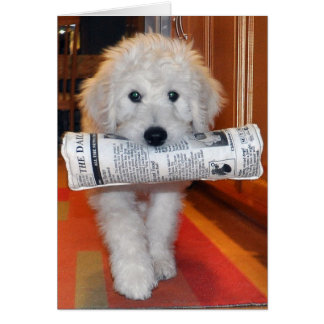 Goldendoodle newspaper card