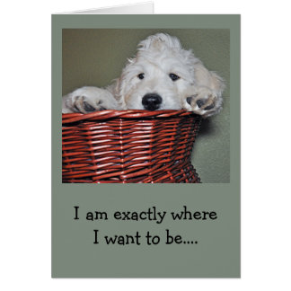 Goldendoodle puppy in a basket card
