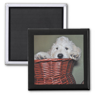 Goldendoodle puppy in a basket magnet
