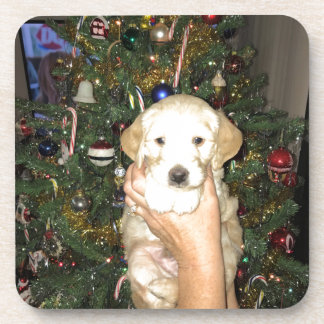 GoldenDoodle Puppy With Christmas Tree Beverage Coaster