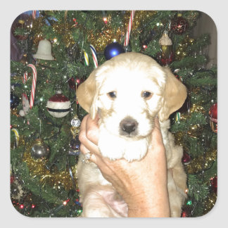 GoldenDoodle Puppy With Christmas Tree Square Sticker