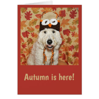 Goldendoodle wearing owl hat for autumn card