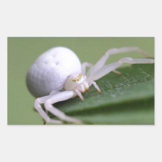 Goldenrod crab spider or flower crab spider