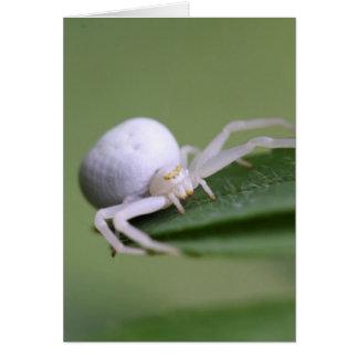 Goldenrod crab spider or flower crab spider card