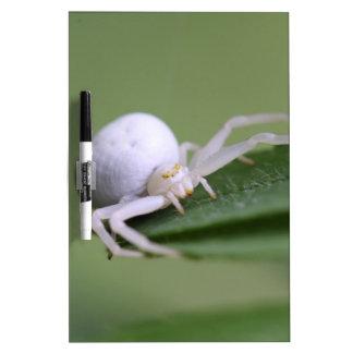 Goldenrod crab spider or flower crab spider Dry-Erase boards