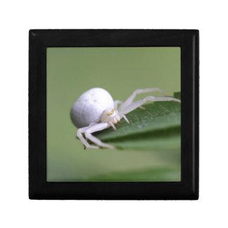 Goldenrod crab spider or flower crab spider gift boxes