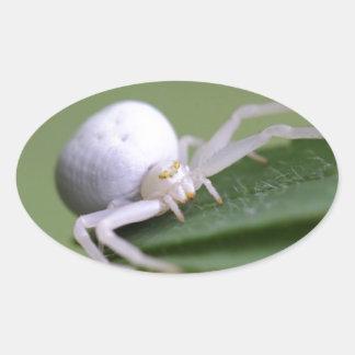 Goldenrod crab spider or flower crab spider oval sticker