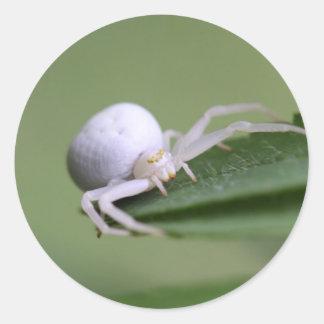 Goldenrod crab spider or flower crab spider round sticker