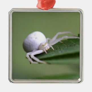 Goldenrod crab spider or flower crab spider Silver-Colored square ornament
