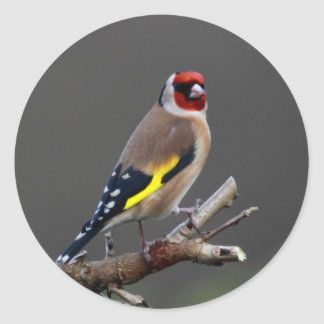Goldfinch bird classic round sticker
