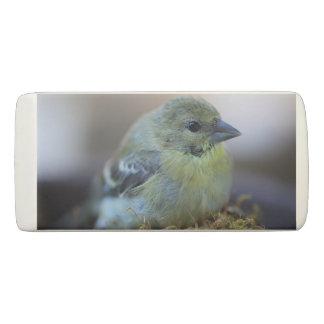 Goldfinch on moss eraser