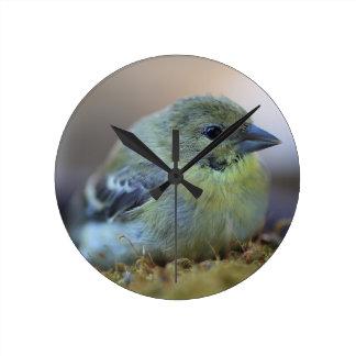 Goldfinch on moss wallclock