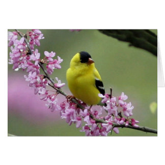 Goldfinch on Redbud Blank Card
