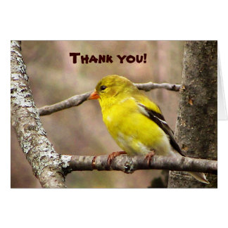 Goldfinch Thank You Card
