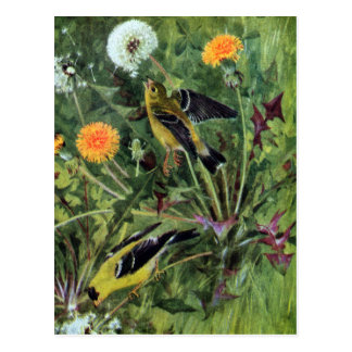 Goldfinches and Dandelions Postcard