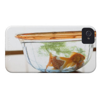 Goldfish bowl iPhone 4 covers