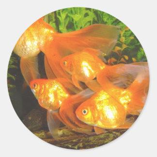 Goldfish Galore Classic Round Sticker
