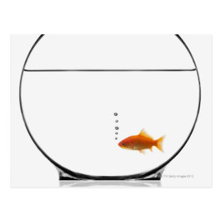 Goldfish in bowl postcard