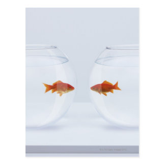 Goldfish in separate fishbowls looking face to postcard