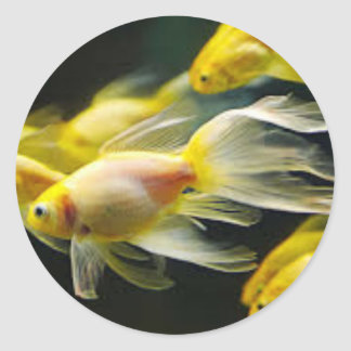 Goldfish sticker