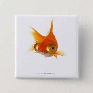 Goldfish with Big eyes 2 Inch Square Button