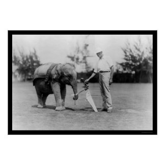 Golfer and Elephant Caddy in Miami, FL 1922 Poster