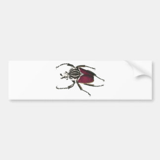 Goliath Beetle Bumper Sticker