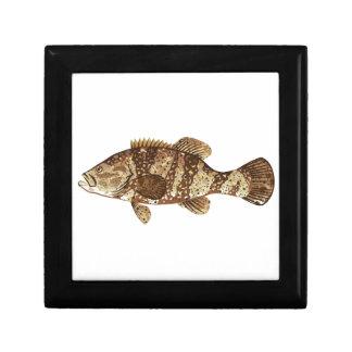 Goliath Grouper Gamefish ocean vector illustration Gift Boxes