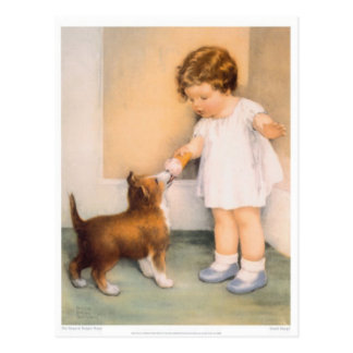 Good Boy!  Border Collie Postcard