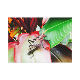 Good Luck Grasshopper Canvas Print