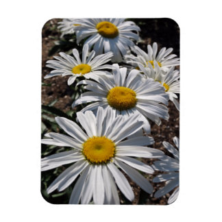 Good Morning Daisies Magnet