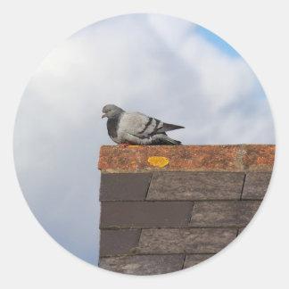 Good Morning Pigeon Classic Round Sticker