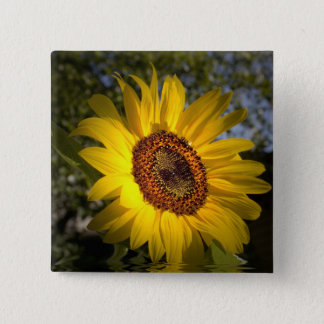 Good Morning Sunshine Sunflower Button
