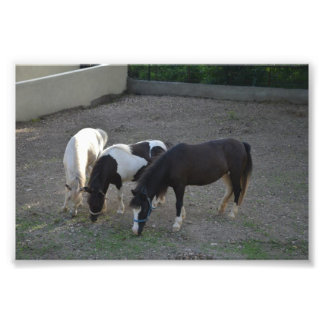 Good Morning to you photo: Adult miniature horses Photo Art