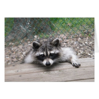 Good Ol' Boy Racoon Card