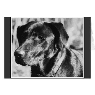 """""""Good ol' Dog"""" - beautiful blank b&w art note card"""