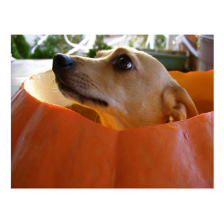 Good Rufus Pumpkin Postcard