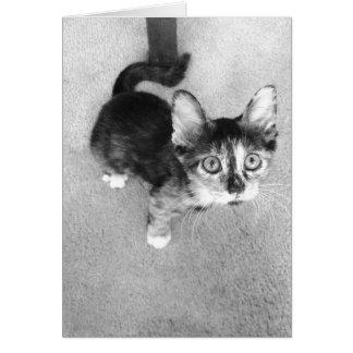 goofy calico kitten, black and white card