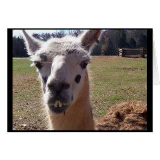 Goofy Llama Card
