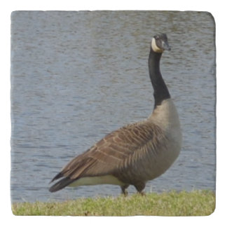 Goose By Pond Trivet