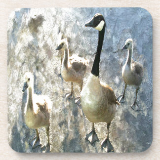 goose coasters