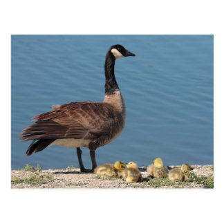 Goose Family Postcard
