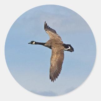 Goose in Flight Classic Round Sticker