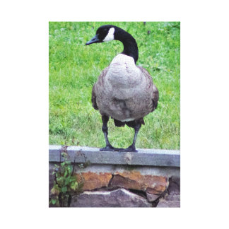 Goose on a Wall Canvas Print